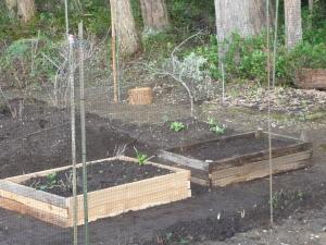 new box of perennial greens