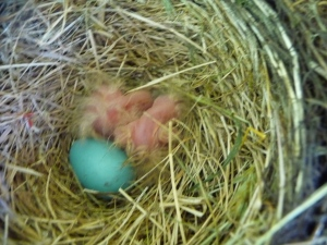 two hatched, one to go