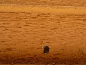 mason bee nest