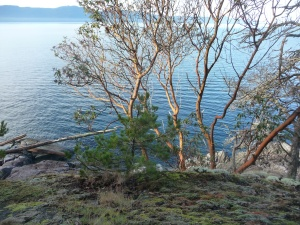 arbutus at Francis Point