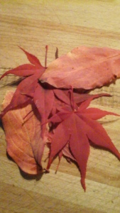 leaves from Hallowell Road