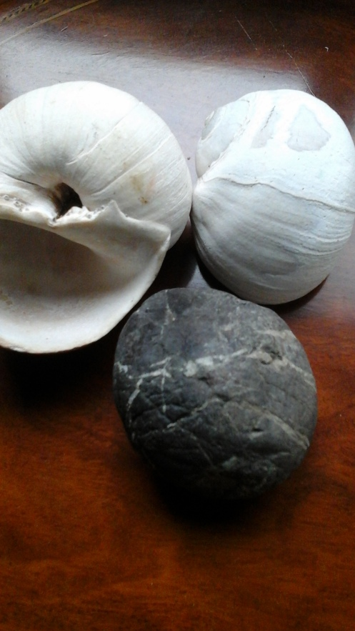 moon snail and stone