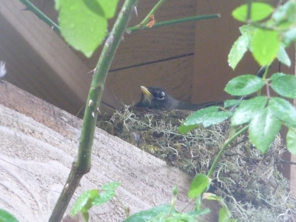 nest (1).JPG
