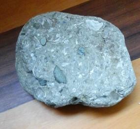 oligoscene fossil.jpg