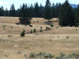 jocko creek horses