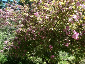 bee loud tree