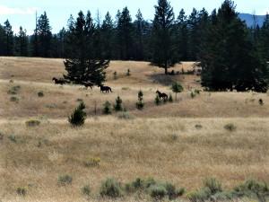 jocko creek horses