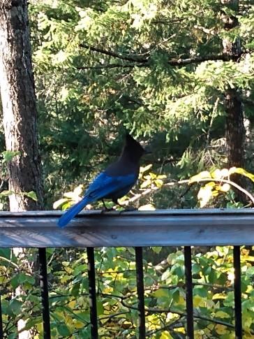 that bird is blue